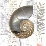 Argonauta Scholars cropped